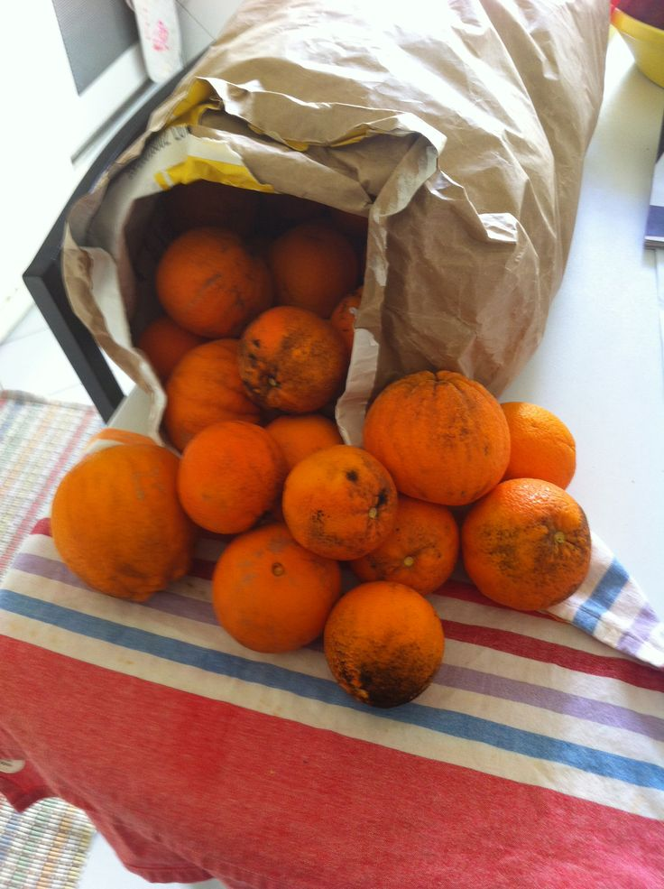 A few days in the Alentejo and came back with a gift of 15 kg of delicious oranges...