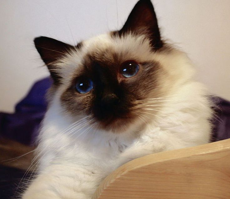 gatos bonitos fotos