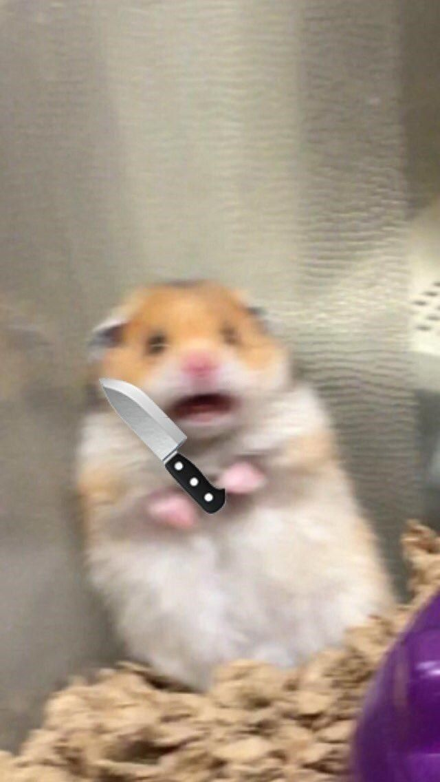 Scared Hamster Is The Internet S Newest Cute Meme Craze Funny Hamsters Cute Animal Memes Funny Animal Memes