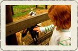 Welcome to the Collingwood Children's Farm. Melbourne's own city farm.