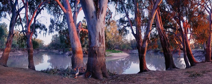 Julie Fletcher Photography | Blue Mountains, NSW  Menindee - Darling River New South Wales  Check out the water marks on the trees. They have only just reopened this area up again after many months of it being closed from flooding.