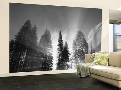 Sunlight Through Pine Forest in Yosemite Valley, Yosemite National Park, California, USA Wall Mural – Large by Adam Jones - at AllPosters.com.au
