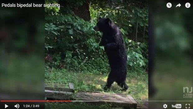 Morte de urso famoso por andar sobre duas patas gera comoção e põe caça em xeque nos EUA - http://anoticiadodia.com/morte-de-urso-famoso-por-andar-sobre-duas-patas-gera-comocao-e-poe-caca-em-xeque-nos-eua/