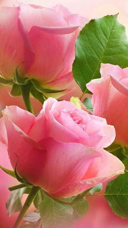rosecottage.quenalbertini: Romancing the Rose | by Armida511 on Flickr