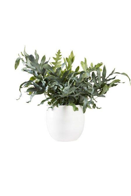 Trendy: planten die de lucht zuiveren en nare geurtjes wegwerken - She.be