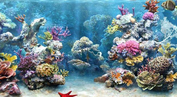 Belajar Biologi Online: Ekosistem Terumbu Karang