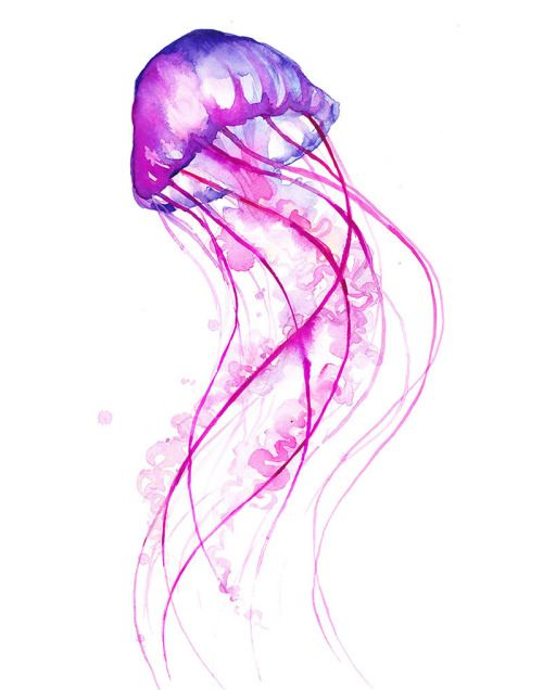 Line Art Jellyfish : Jellyfish watercolor tumblr bathroom makeover