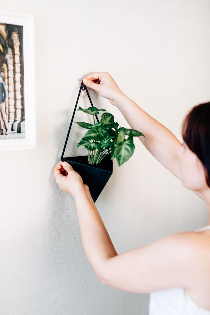 Lush green plants bring an empty wall to life! Whether it be ferns, flowers, vegetables or herbs why not transform your unused space?