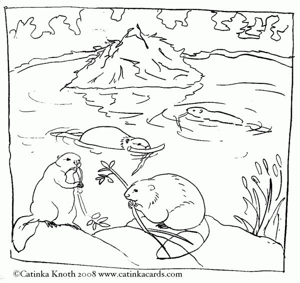 coloring sheet beavers - Google Search