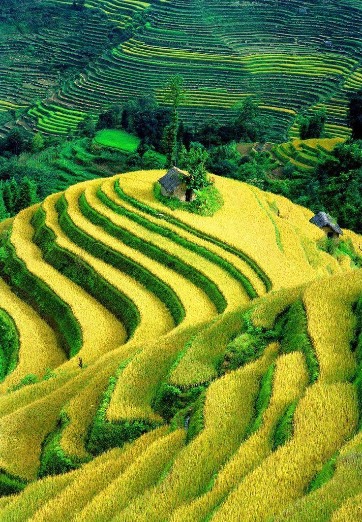 Rice terraces Yuanyang Vietnam
