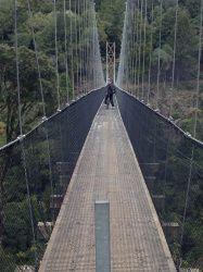 Mountain Biking The Timber Trail in Pureora Forest   Antony Millen