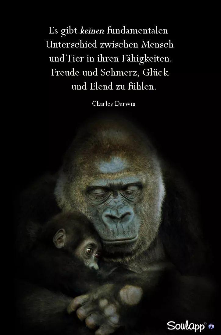 Unterschied Tier Mensch
