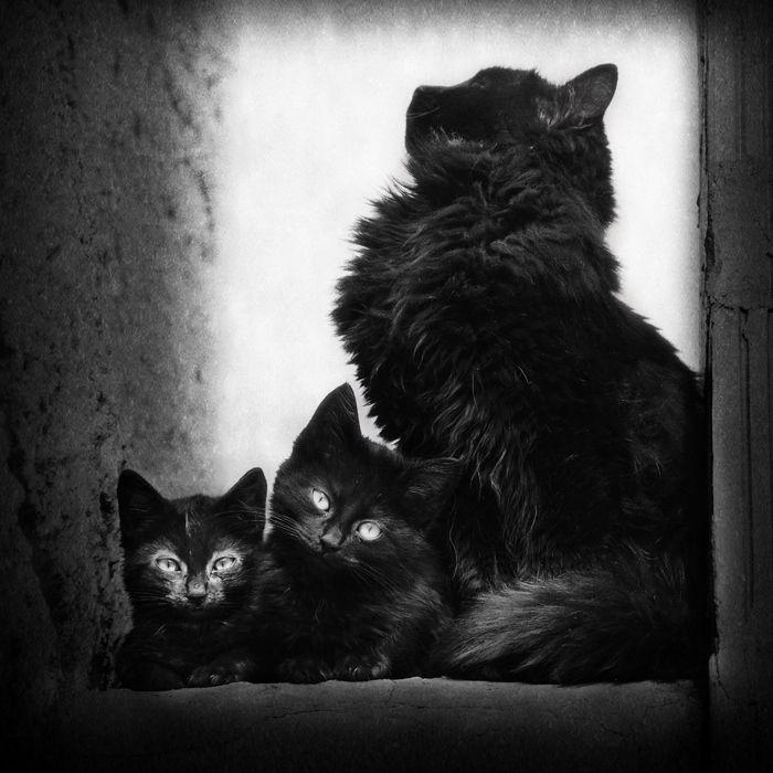 это черная кошка с котенком картинки что линии