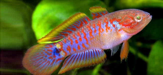 168 best images about fish and aquascape ideas on for Small freshwater aquarium fish