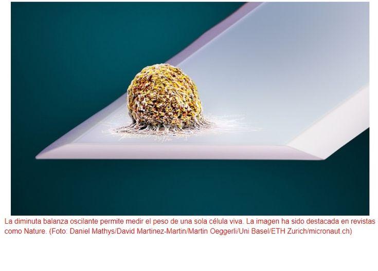Crean báscula que pesa células vivas PDM Productos Digitales Móviles