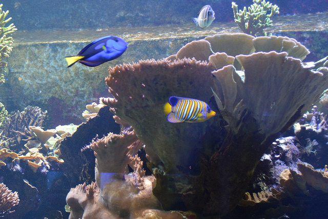 Home Aquarium Fish Youaqua Aquarium Aquariumhobby Aquariumlife Underwaterfish Home Aquarium Fish Beautiful Fish Underwater Fish