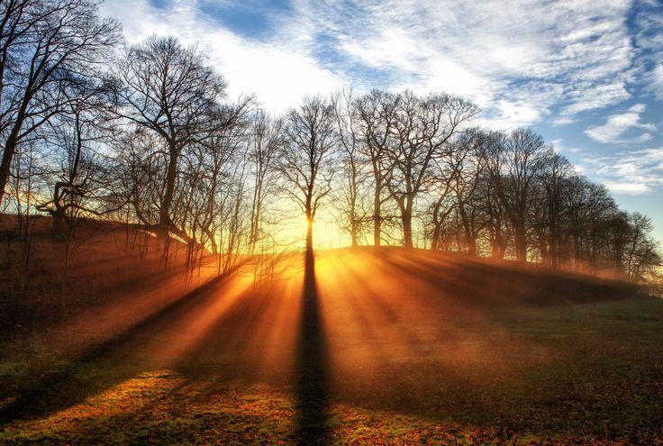 Forest Mist by Kent Mathiesen on 500px