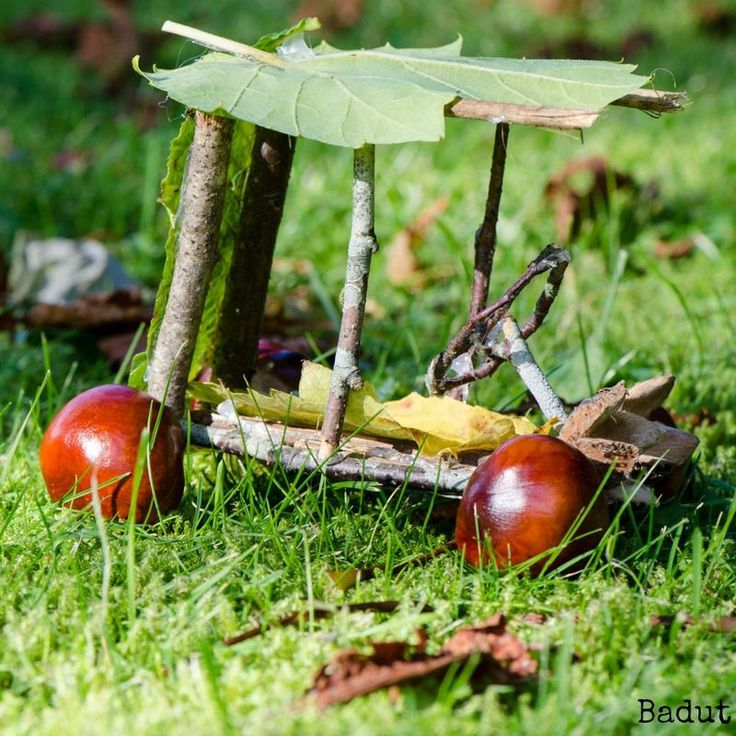 little car made from conkers and twigs at Badut