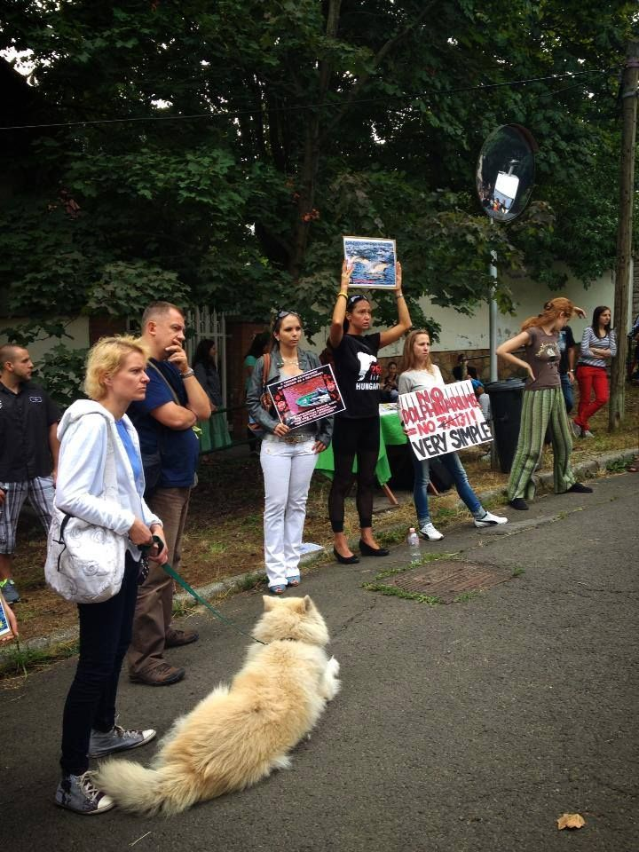 1 Sept 2013 - Embassy of Japan, Budapest, Hungary. Protest against taiji dolphins slaughter. https://www.facebook.com/media/set/?set=a.507735415967361.1073741841.483485295059040&type=3