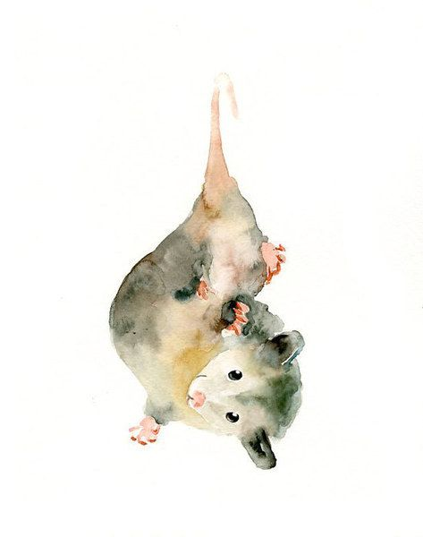 OPOSSUM 5x7 Print-Art Print-animal Watercolor Print-Giclee Print--Childrens Wall Art. $8.00, via Etsy.