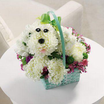 Very creativePoodles Cor-De-Rosa, Poodles Bouquets, Flower Girls Baskets, Crafts Ideas, Flower Poodles, Flower Baskets, Flower Delivery, Bouquets Baskets, Precious Poodles