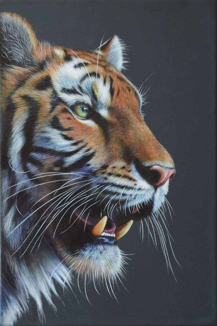 """An original Tiger painting, box-framed and ready to wall hang, measures 12x18"""". Reserved for my solo exhibition in Hereford until 6 September 2015."""