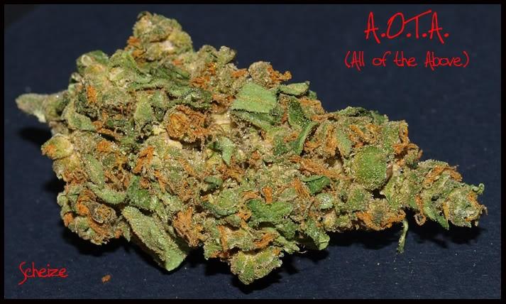 Aota: Cannabis Strains