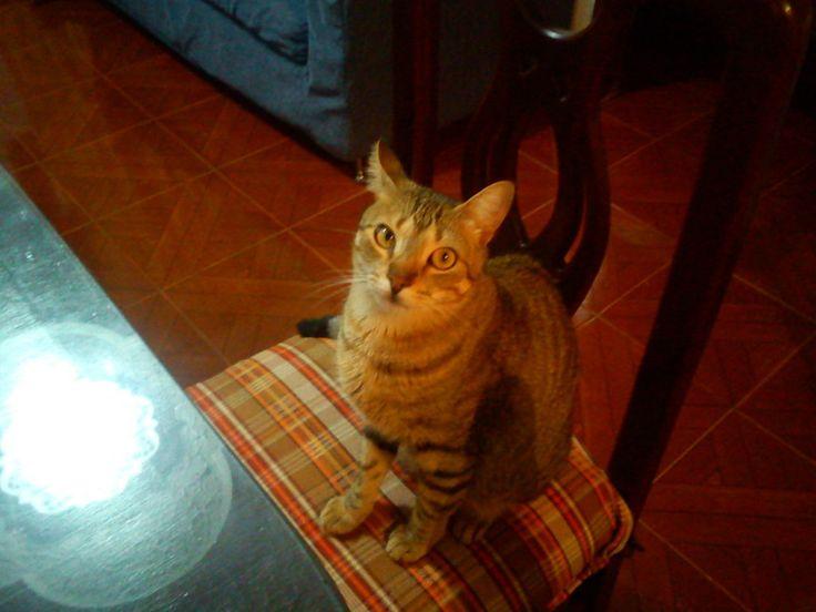 Gato mirando al techo | martha-marthica