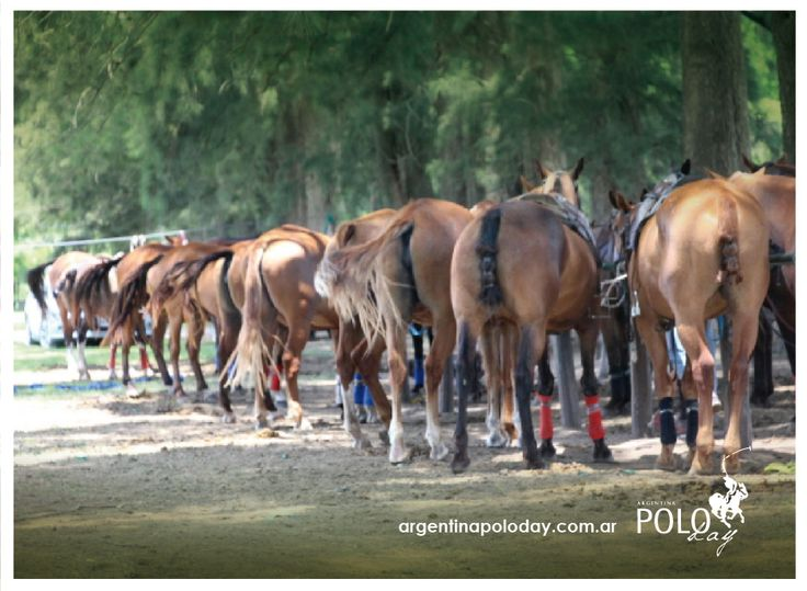 More than 200 horses. Polo every day. Outstanding polo fields #PoloHolidays #PoloSchool #PoloClinics #Travel #TravelArgentina #Argentina