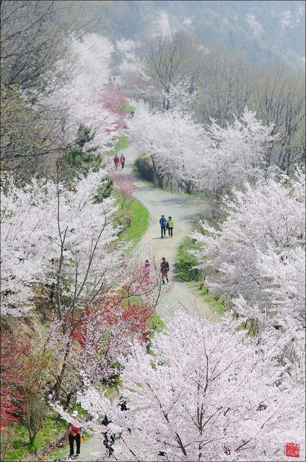 Jinhae gu South Korea 32 Outstanding Photos of Marvelous Places Around the World