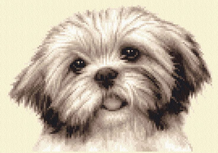 SHIH TZU dog, puppy ~ complete counted cross stitch kit - all materials supplied
