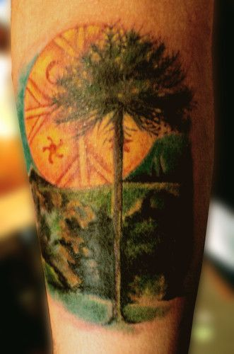 Araucaria.......... hecho en la conve del bio bio !!!!!!!!!!! - tattoo__dani