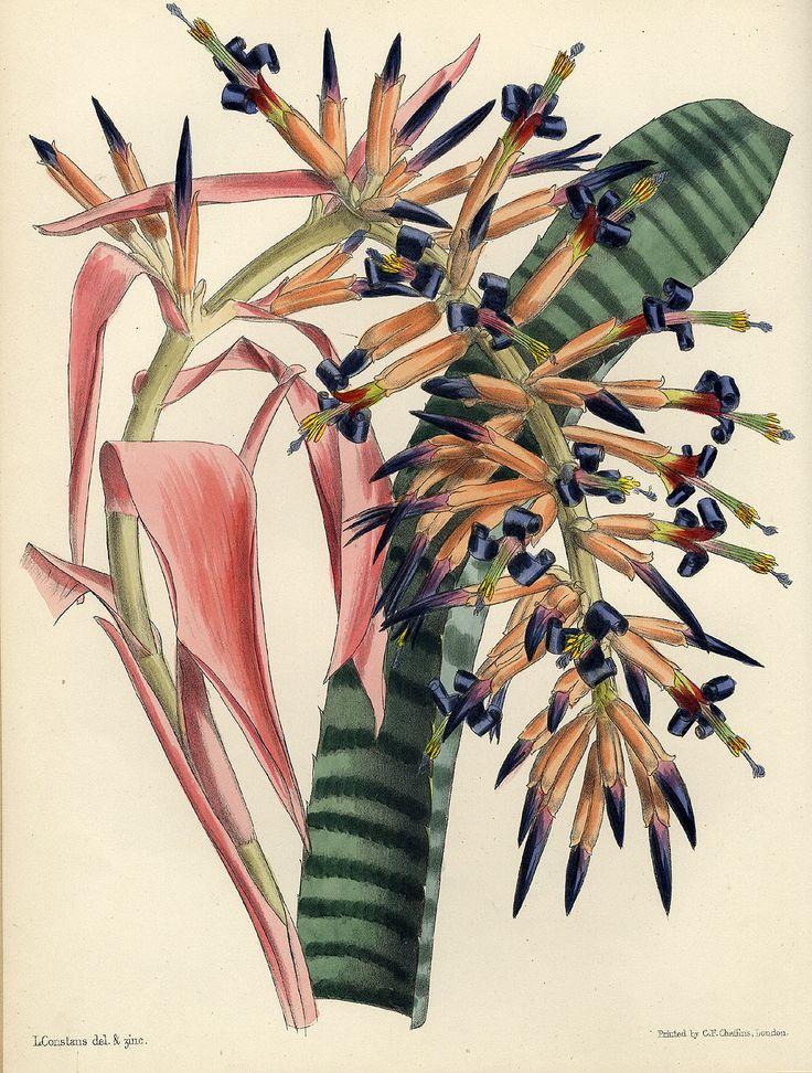 John Lindley / Joseph Paxton: Paxton's Flower Garden. 3 Bde. London, 1850-1853.