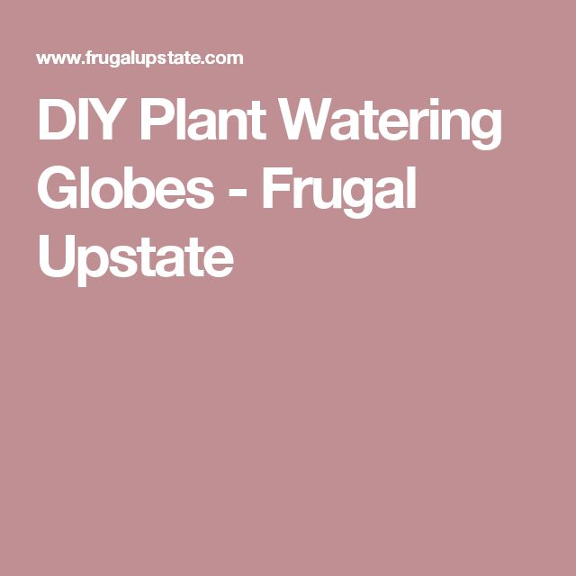 DIY Plant Watering Globes - Frugal Upstate