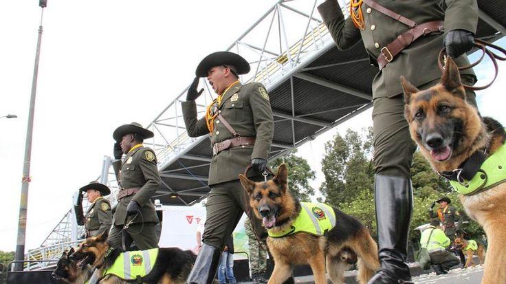Son ellos nuestros mejores aliados en el momento de velar por tu #Seguridad #DOG #CAN