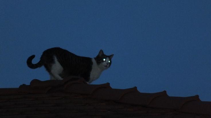 #cats #caturday #blackandwhite #kot #animals #pets #Night #cat #