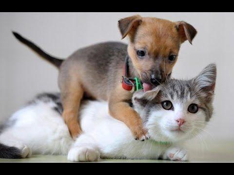 cães bonitos | filhotes de cachorro engraçados | gatos bonitos e gatinhos | melhores animais de estimação engraçados | animais são incríveis | pets 2015 | me...