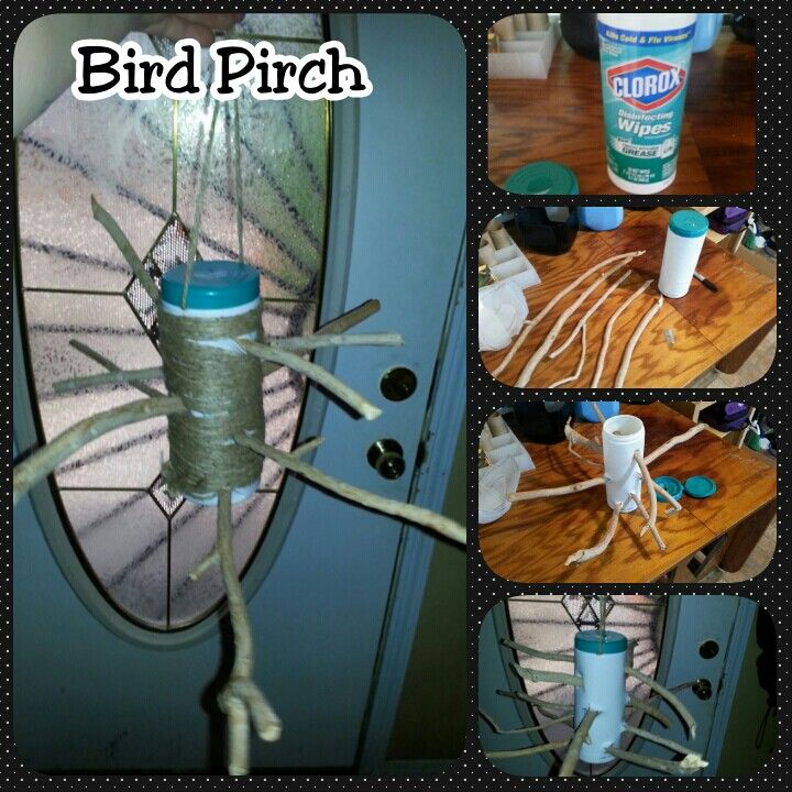 We made a bird perch using an old clorox wipes container some branches that came off the tree outback and some twine