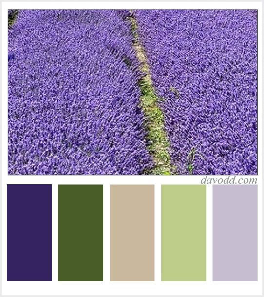 27 Best Images About Lavender Paint Palettes On Pinterest