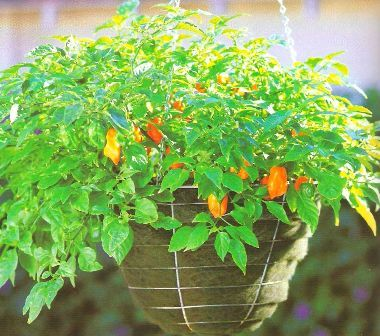 Vegetable Container Gardening Ideas a quick guide to container gardening Find This Pin And More On Container Gardening