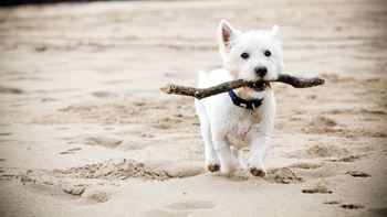 Dog friendly beaches in Pembrokeshire, Wales | Visit Pembrokeshire