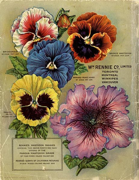 Toronto's William Rennie Seed Company was the largest mail order seed house in Canada.  pansies