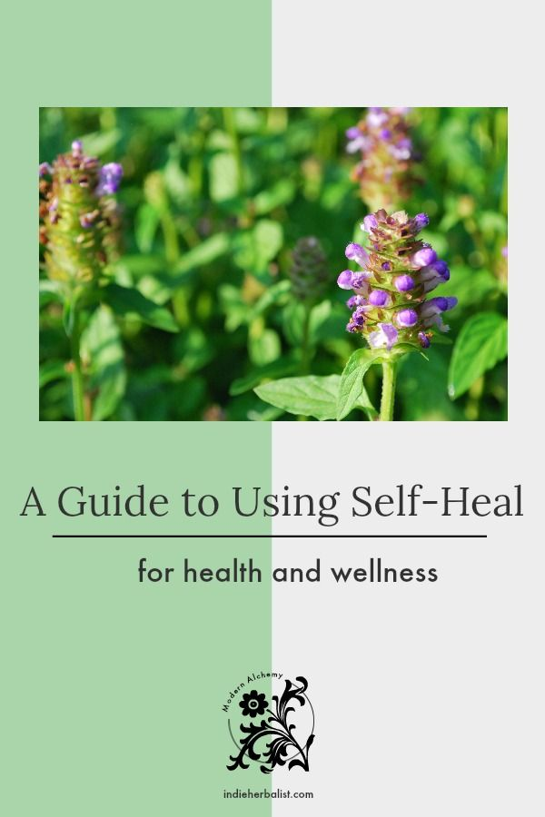 How To Get Rid Of Self Heal In Lawns