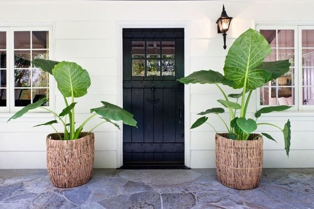 tropical front porch planter statement front door
