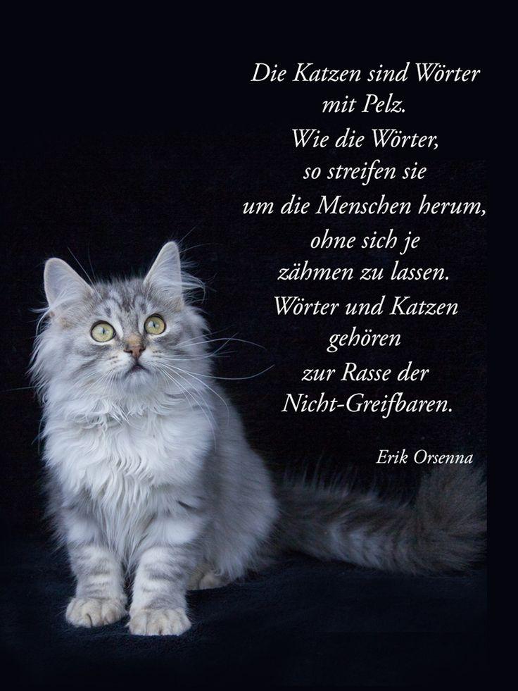 Katzen sind wie Wörter... | Quotes | Pinterest | Cats, Dog ...