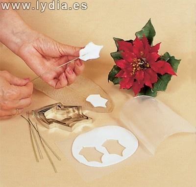 Lydia Formazione :: Leggi argomento - Stella di Natale