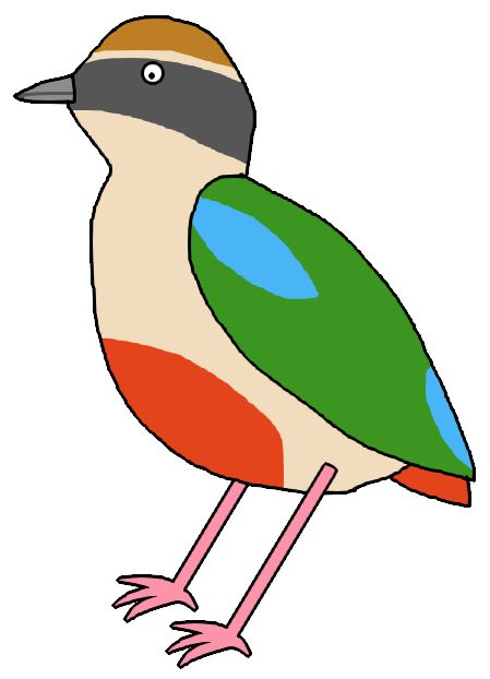 Fairy Pitta / ヤイロチョウ / #Animal #Bird