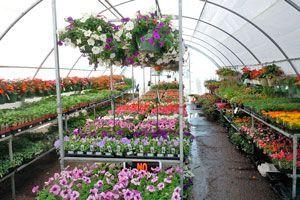 Para abrir un vivero no sólo tienen que gustarte las plantas, también debes saber un poco sobre negocios y publicidad. Lee los siguientes consejos para iniciarte en este proyecto
