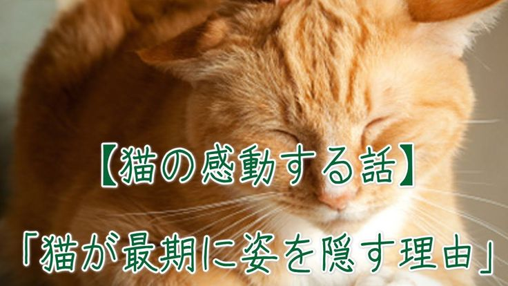 【1分涙腺崩壊】猫が最期に姿を隠す理由【猫の感動する話】  猫が死ぬ前に姿を隠すのは何故か知っていますか?そこには猫と人間との深い関わりをあらわす言い伝えがありました…。   ☆☆☆☆☆☆ 涙腺崩壊-1分で感動!では、 泣ける話、感動する話を 厳選して配信しています。   音と画像で心震える感動を…。  チャンネル登録すると 新しい動画がスグに見れます☆ ▼▼▼ http://www.youtube.com/subscription_center?add_user=namidaafureru
