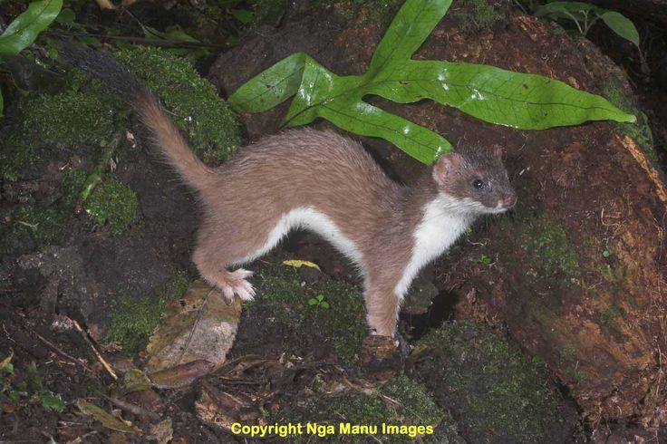 Image result for extinct new zealand animals